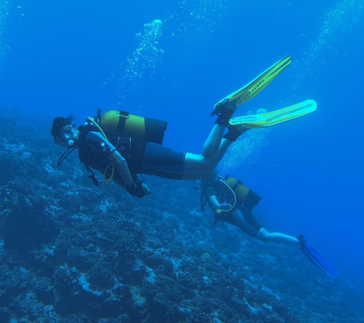 Practicar submarinismo en Puerto Sherry